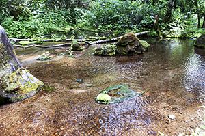 麓を流れる清らかな源水